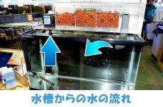 画像3: 【飼育用品・器具】【フィルター】【上部フィルター】EASY TOP フィルター MODEL600【送料梱包料込み】(淡水 海水可) (3)
